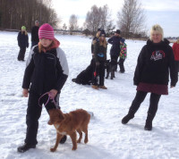 hundsportlov_150211