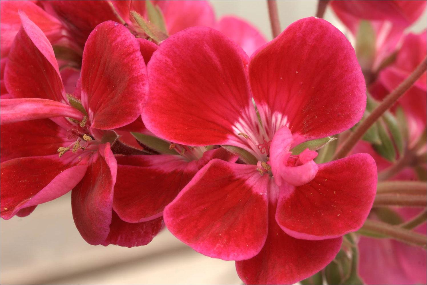 mötesplatsen blommor långedrag öppettider Åkersberga